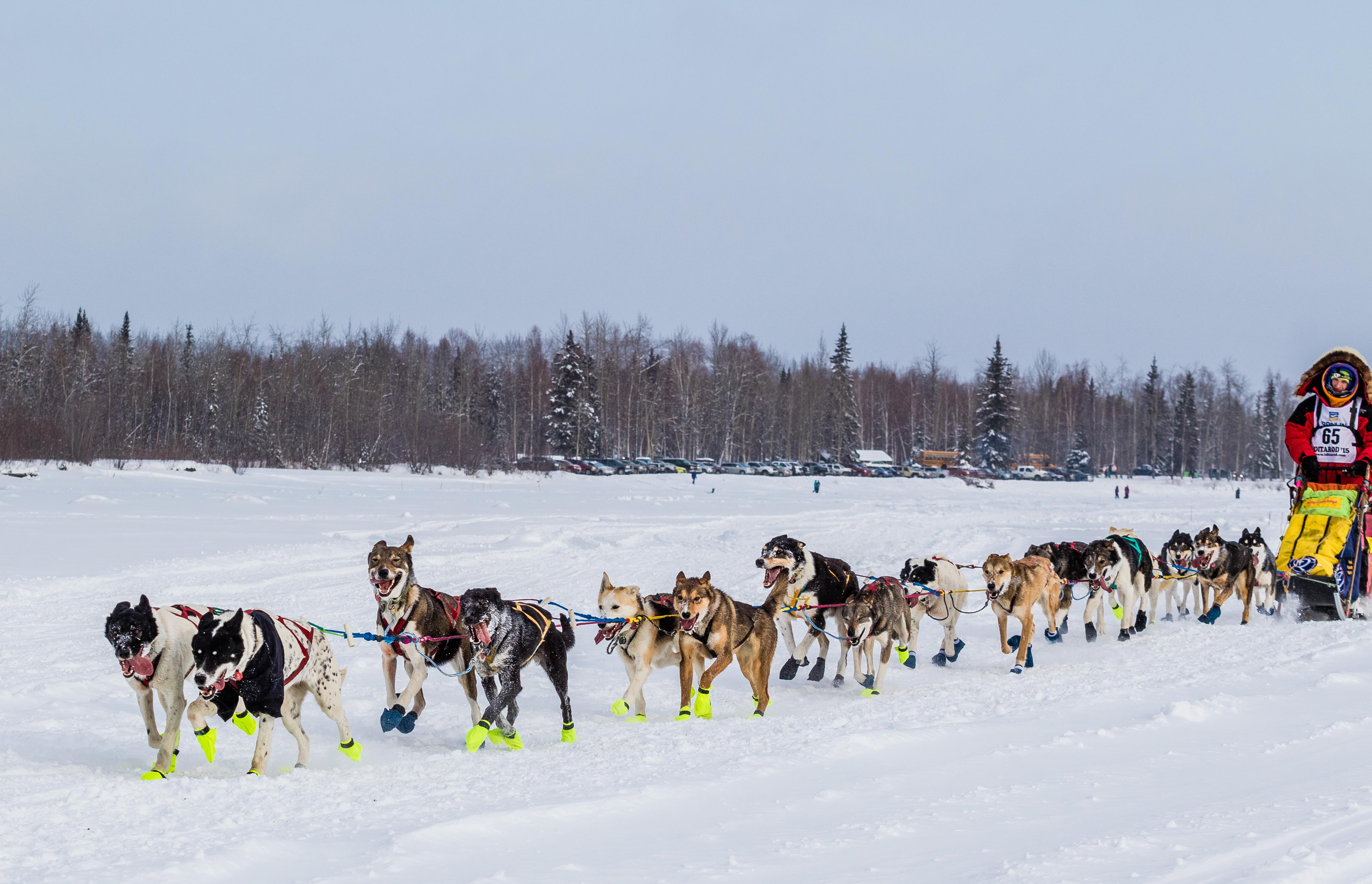 iditarod-dog-sled-race